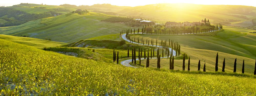 Weinberge im italienischen Weinanbaugebiet der Toskana