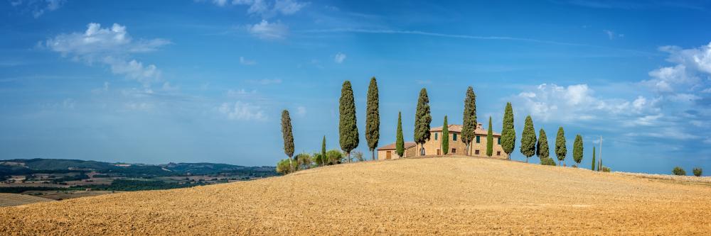 Zypressen sind typisch für das Landschaftsbild der Toskana